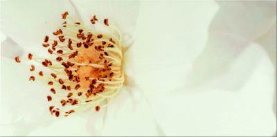 DIAGO INSERTO FLOWER A