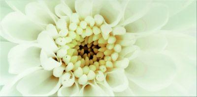 DIAGO INSERTO FLOWER B