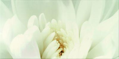 DIAGO INSERTO FLOWER C